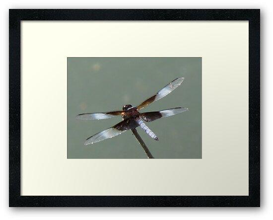 Glassy Biplane Dragon by Alex Call