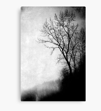 Mystic Daze Canvas Print
