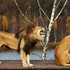 Lions Talk by Jo Nijenhuis