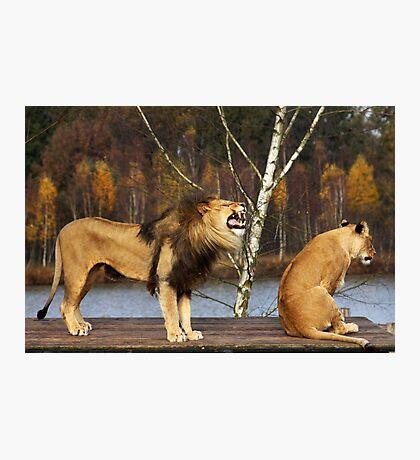 Lions Talk Photographic Print