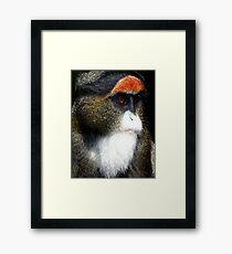De Brazza's Monkey Framed Print