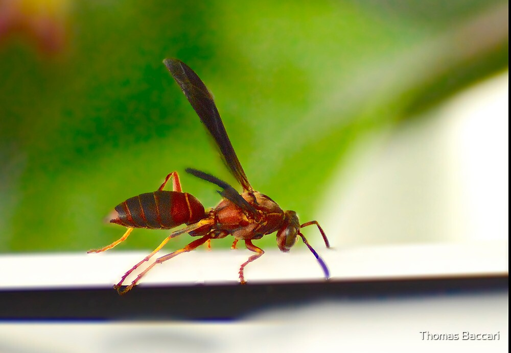 Wasp on the ledge by TJ Baccari Photography