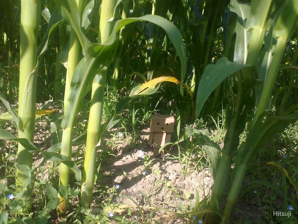 Lost in wheatfield by Hitsuji