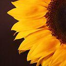 Sunflower by shortarcasart