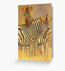 Common or Plains Zebra (Equus burchelli) Greeting Card