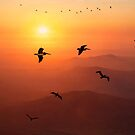 Pelican Migration by Chris Lord
