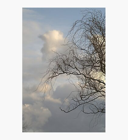 Curly Wllow Photographic Print