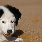 First Day at the Beach by paulmcardle