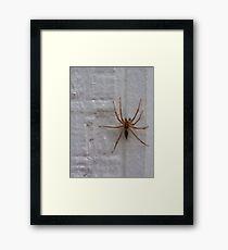 Siding Spider not so Sly Framed Print