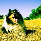 beware the dog! by BellatrixBlack