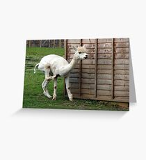 145 - AN ITCHY ALPACA - DAVE EDWARDS - 2012 Greeting Card