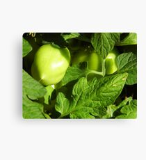 Green, Green Vegatables Of Home Canvas Print