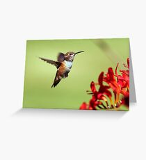 Feathered Dancer Greeting Card
