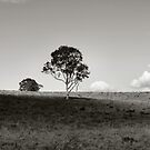 QUEENSLAND OUTBACK by Colin Van Der Heide