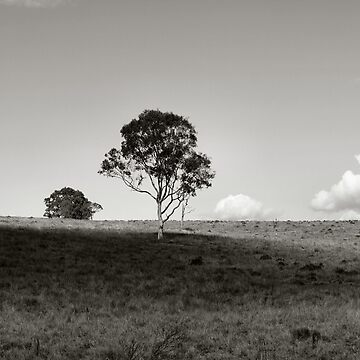 QUEENSLAND OUTBACK by AussieColin
