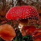 Wild Mushrooms by NIKULETSH