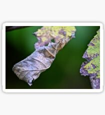 Crumpled leaves Sticker