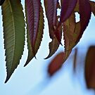 leaves for fall by Spencer Backman