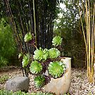 Cloudehill Garden, Olinda, Victoria, Australia, by johnrf