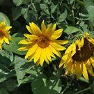 Three's A Growd by Barb Miller