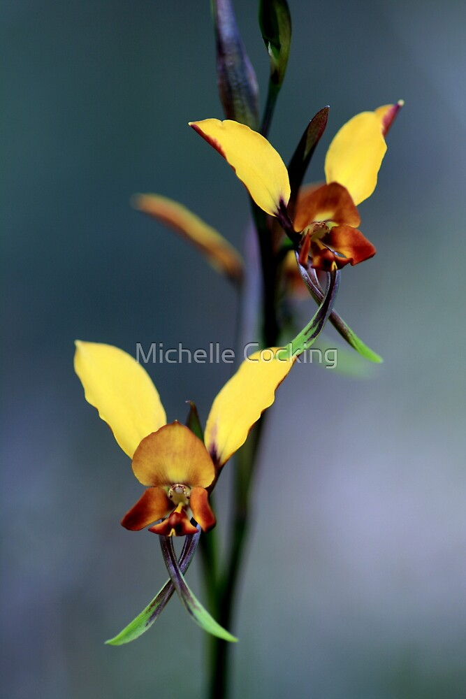 Pansy Orchid by Michelle Cocking