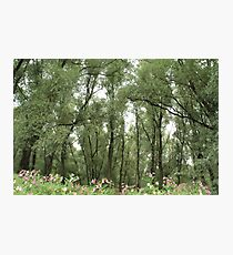 Willow forest Photographic Print