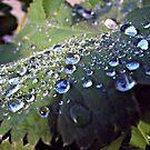 Let the rain fall down. by queenxtc