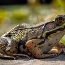 Frogger by phototherapy318