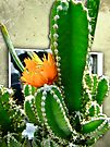 Cactus With Orange Flower by MotherNature