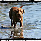 Water Dog by Angie O'Connor