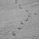 Sandhills and sandshoes. by yook