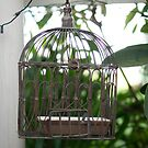 Cute Cage by michellerena