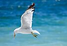 Gull with Fish  by Elaine Manley