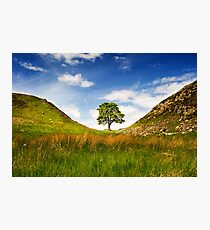 Sycamore Gap on Hadrian's Wall Photographic Print