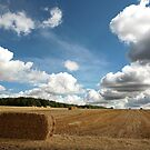 An english harvest by Mark Bunning