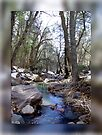 Cherry Creek by Vicki Pelham