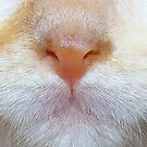 Kittens Nose(macro) by PatChristensen