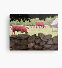 Bull session ... Metal Print