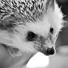 Hedgehog Love by miriielizabeth