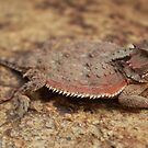 Horned Toad Basking In The Sun by Jazzy724