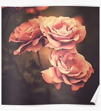 Three Pink Roses (Vintage Flower Photography) Poster