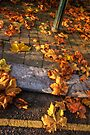 Dead Leaves on the Dirty Ground by Nigel Bangert