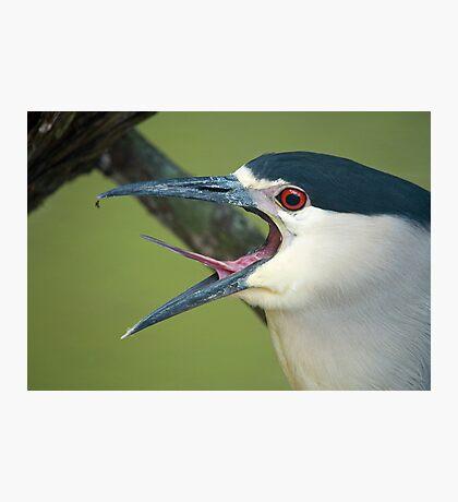 Black Capped Night Heron Photographic Print