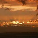 Primrose Sunset by DEB CAMERON