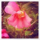 Sasanqua in the Rain by DEB CAMERON