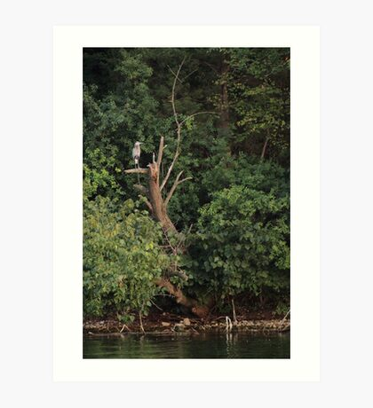 Great Blue Heron in Tree Art Print