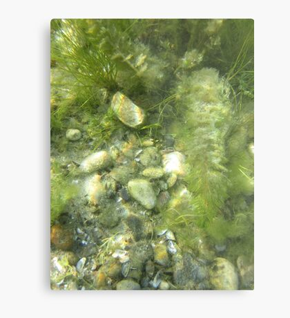 Underwater Vegetation 511 Metal Print