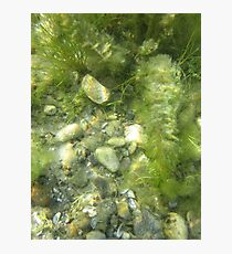 Underwater Vegetation 511 Photographic Print