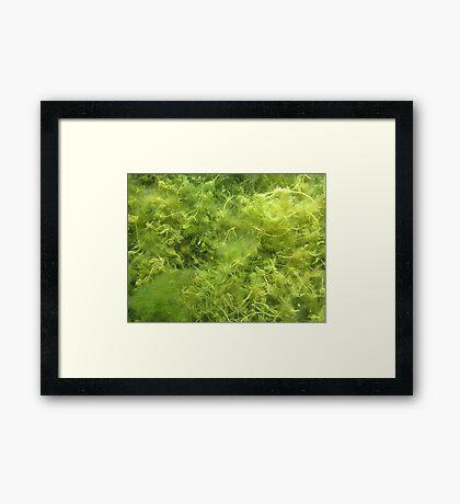 Underwater Vegetation 514 Framed Print