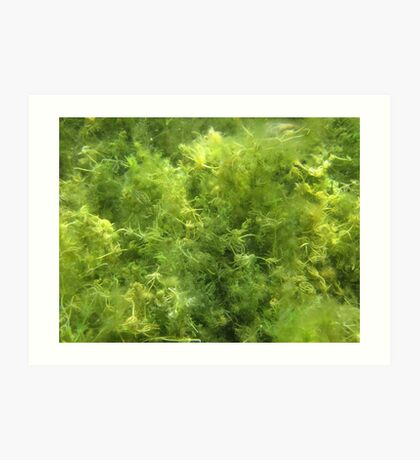 Underwater Vegetation 515 Art Print